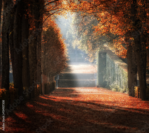 Fototapety, obrazy: A ray of light coming through trees