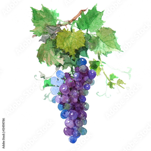 Fotografía  Watercolor grape bunch of green and dark grapes isolated on a white background illustration