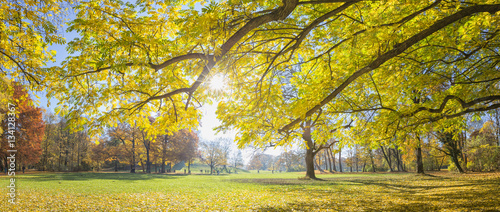 Canvas Prints Honey Panoramic image of the park English Garden in autumn, Munich, Germany. Shot against the sun.