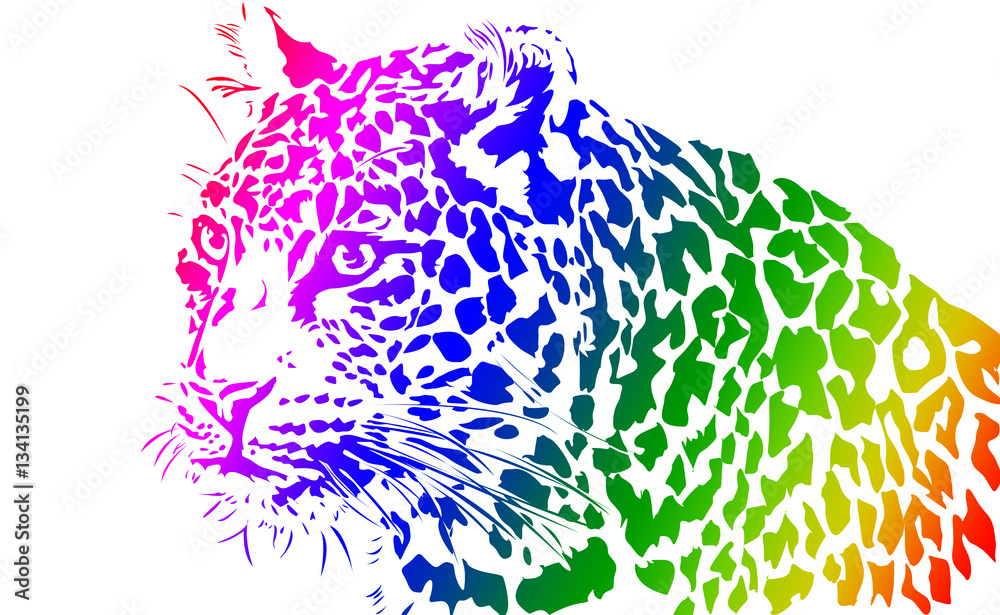 Leopard, Big Cat Illustration from India on White Background