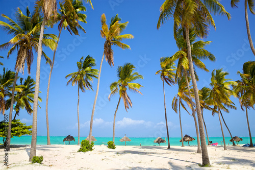 Spoed Foto op Canvas Zanzibar Perfect sand beach with palm trees, Zanzibar, Tanzania