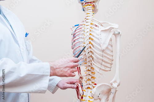 Fotografía  Closeup on medical doctor man pointing on thorax of human skeleton anatomical model