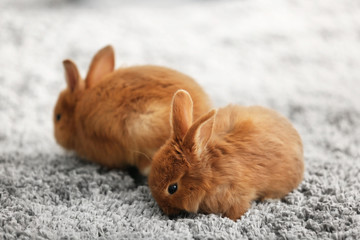 Cute red rabbits on carpet at home