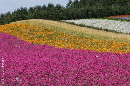 Aluminium Prints Violet 夏の花畑