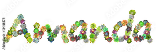 Amanda Succulent Name Wallpaper Mural