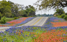 Spring Wildflowers Along Texas...