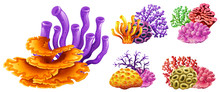 Different Kinds Of Coral Reef