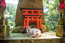 Wooden Torii Gates And Cat
