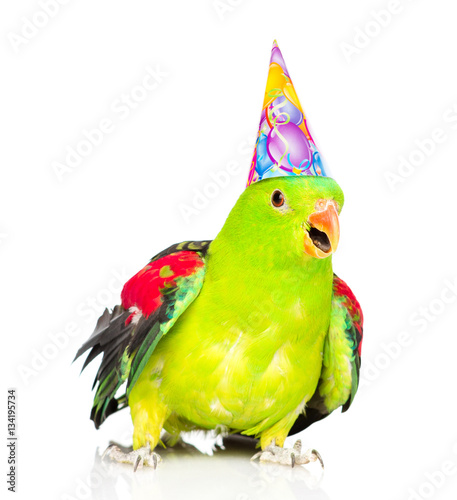 Parrot in birthday hat looking at camera . isolated on white