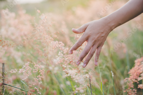 Foto Woman's hand touch the grass in field at sunset . Rural and natu