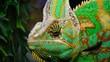 The veiled chameleon, cone-head (Chamaeleo calyptratus)