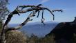 Martwe drzewo na tle dolin - Montserrat