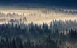 Leinwandbild Motiv coniferous forest in foggy mountains