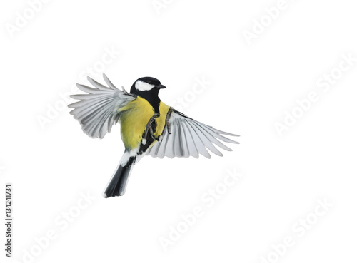 Ingelijste posters Vogel bird flying on a white background is widely spread its wings and feathers