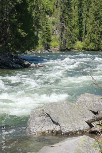 Foto op Aluminium Rivier Whitewater river runs through forest