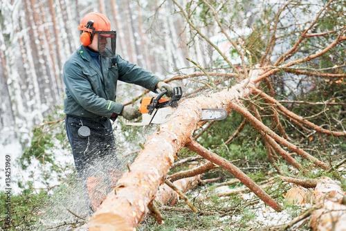 f97d61f0 Lumberjack cutting tree in snow winter forest – Kjøp dette bildet og ...