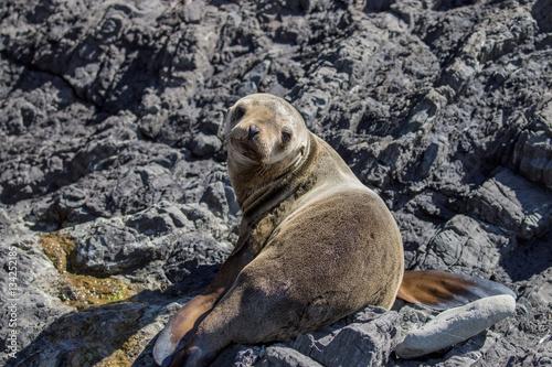 Plakat  Juvenile Sea Lion