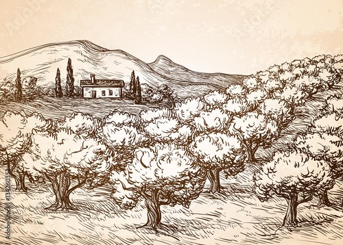 Obraz na plátně Hand drawn olive grove landscape.
