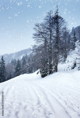 Papiers peints Alpes Snow-covered winter forest, Road snowfall.