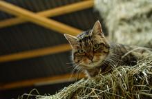 Katze Im Stall