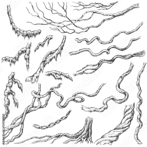 Photographie Liana Branches  Sketch