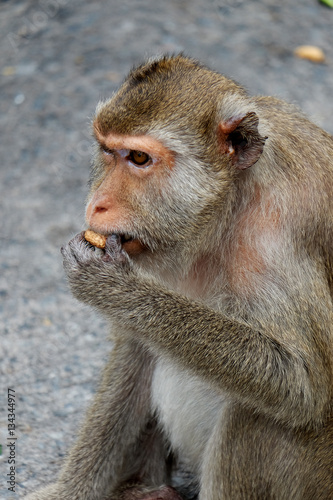 In de dag Cute monkey lives in a natural forest of Thailand,Baby monkey eating fruit.soft focus of animal wildlife.