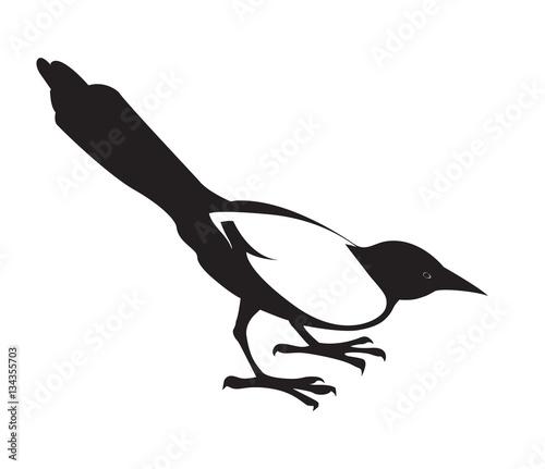 Fotografia Magpie. Black decorative silhouette on white background.