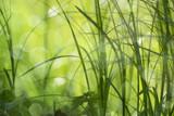 Frisches Gras im Frühling