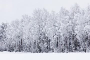 FototapetaLeśny zimowy krajobraz