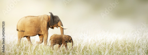 Foto op Aluminium Olifant Mom and Baby Elephant Walking Through Tall Grass