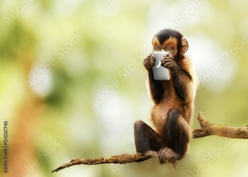 Fotografie, Tablou Monkey Texting on Cell Phone