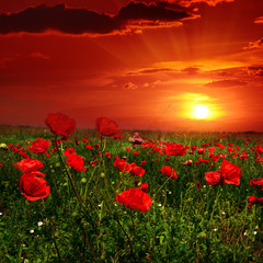 Panel SzklanyBright sunrise in poppy field