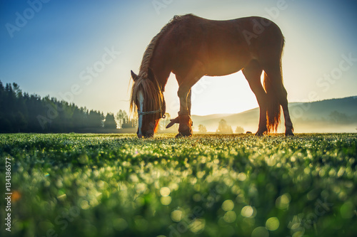 Horses grazing on pasture at misty sunrise