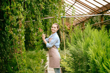 Pretty Young Gardener Looking After Virginia Creeper In Greenhouse