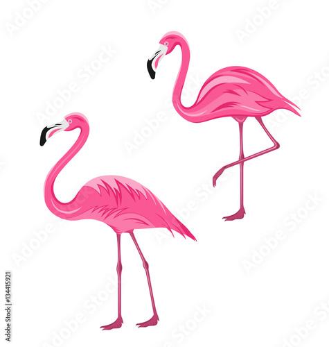 Canvas Prints Flamingo Bird Couple Pink Flamingos Isolated on White Background