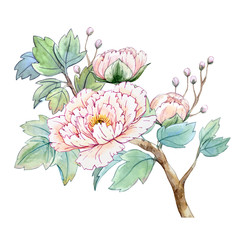 Fototapeta Orientalny Watercolor chinese peony flower