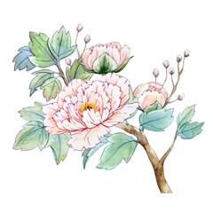 FototapetaWatercolor chinese peony flower