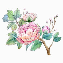 Panel Szklany Peonie Watercolor chinese peony flower