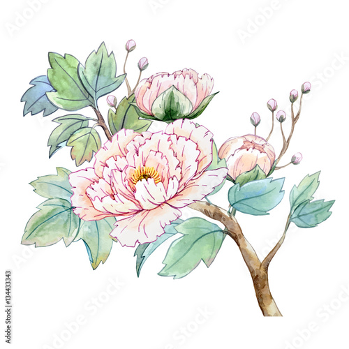 Watercolor chinese peony flower - 134433343