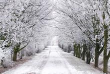 Frostige Alle Im Winter Mit Reifbedeckten Bäumen