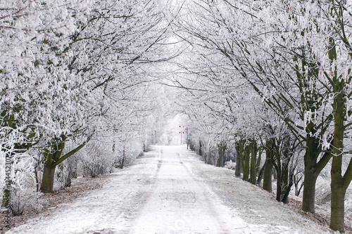 Photo frostige Alle im Winter mit reifbedeckten Bäumen