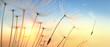 canvas print picture - Pusteblume im Sonnenlicht