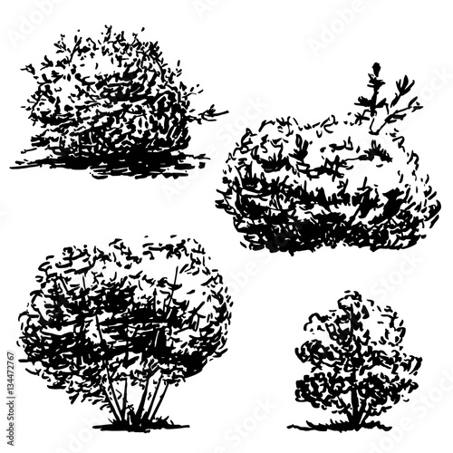 Set of four hand drawn bushes sketch, black nature flora illustration, isolated on white background Fototapete