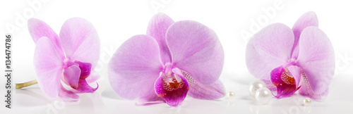 In de dag Orchidee large orchid flowers on a white background. Beautiful floral background