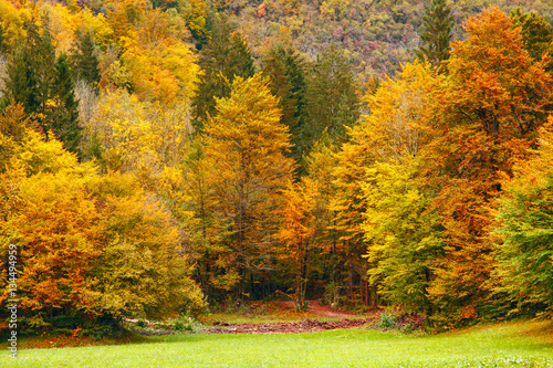 Deurstickers Herfst Beautiful fall scene