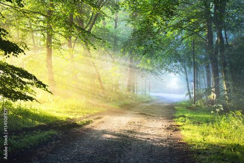 Montage in der Fensternische Gelb Schwefelsäure Gravel road in a misty foggy forest with sun rays. Osnabruck, Germany