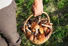 Basket Of Boletus Mushrooms In The Hand