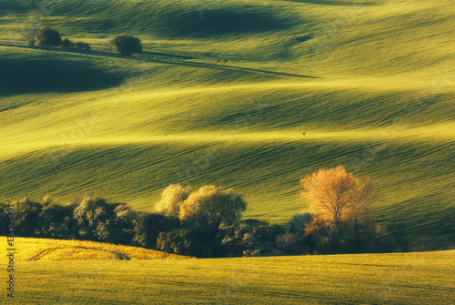 Staande foto Meloen Blooming trees against fields at sunset in spring in South Moravia, Czech Republic. Colorful landscape with fields with green grass and trees. Waves hills, rolling. Nature background. Agriculture