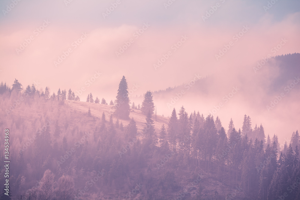 Foggy autumn landscape at mountain valley with pine tree forest. Dramatic and picturesque morning scene. Vintage toning effect. Carpathians, Ukraine, Europe. Exploring beauty world