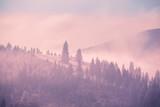 Mgłowy jesień krajobraz przy halną doliną z sosna lasem. Dramatyczna i malownicza poranna scena. Efekt tonowania w stylu vintage. Karpaty, Ukraina, Europa. Odkrywanie świata piękna - 134534963